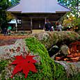 紅葉の鶏足寺